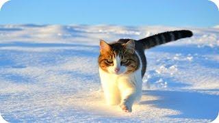 Смешные Кошки 2016 7 Веселая Видео Подборка Смешные Животные 2016