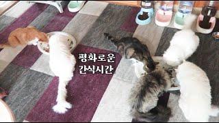 간식시간 (파티*스, …