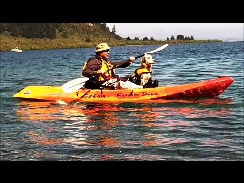 Cobra Fish N Dive Kayak First Day Test Run With My Dog!