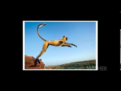 Monkey Jump -Drakkaris