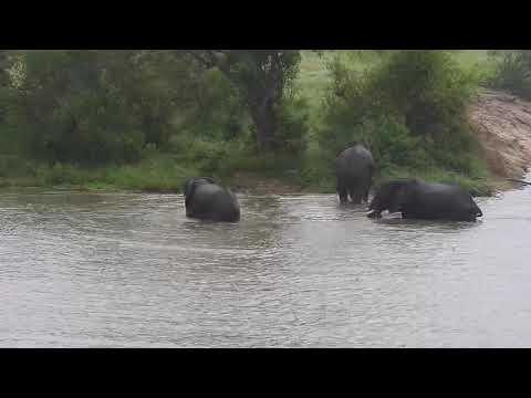 Djuma: Three Elephants having some water play-rest of herd arrives-Pt:2 - 08:40 - 02/23/20