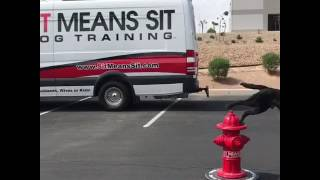 Dog training - longer send outs to fire hydrant