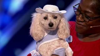 Mia Moore: the dog who can read and  Count:  Americas Got Talent 2017