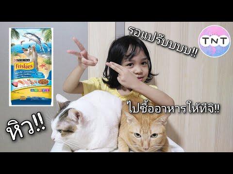 Ep.4  | น้องตรองไปซื้ออาหารแมวให้ติ๋มกับนิ่มนวล | Go to buy cat food at Makro