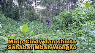 Mbah Wongso Prayogo Cindy Gadis Desa Shinta Aprilia Suku Mante