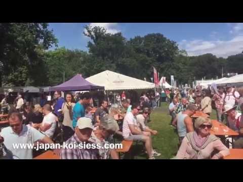Holland Koi Show - Arcen 2016