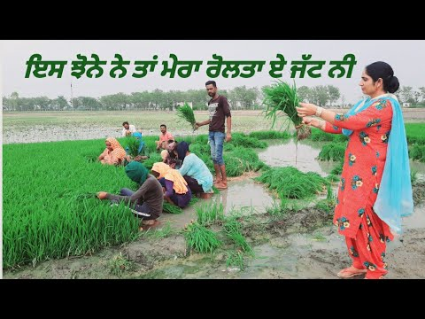 Rice Cultivation In Punjab|Agriculture In Punjab , Paddy Season In Northern India, Farmers Of Punjab
