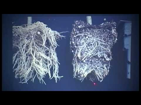 Dr. Carl Whitcomb, Improving Plant Root Systems