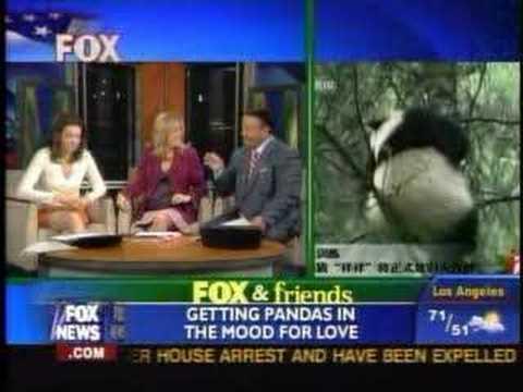 Panda Porn on F&FW