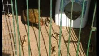 Gladiadores con plumas. Cap 9 'La vuelta a Cádiz en 80 mundos'
