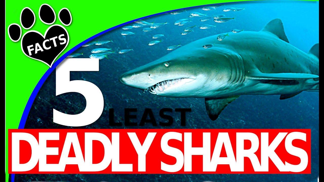 Shark Week: 5 Least Deadly Shark Species  - Least Dangerous - Animal Facts