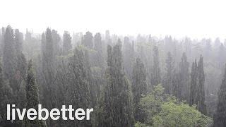 【激しい雨の音】雨音 激しい - 自然音 癒し - 流音 - 臨場感 - 環境音 - ノイズキャンセラー - リラックス - リラクゼーション - 音楽療法 - 静か - 睡眠 - 集中力