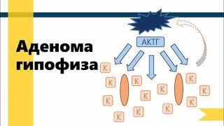 Что такое синдром Кушинга