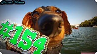 Приколы с животными №154   Собаки и их морды  Смешные животные  Animal videos