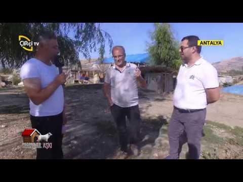 Saf Kan Kangal Nasıl Olmalı ? - KANGAL AŞKI / Çiftçi TV