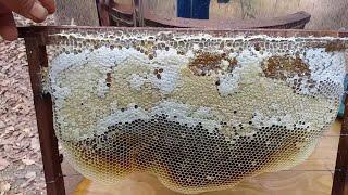 """Kinh nghiệm nuôi ong lấy mật dành cho người mới nuôi (ong nội) """"săn bắt đồng nai """""""