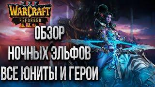 НОЧНЫЕ ЭЛЬФЫ ОБЗОР: Первый Взгляд в Бете Warcraft 3 Reforged
