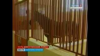 Выставка лошадей карачаевской породы