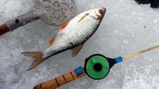 Поклевка большого карпа видео Рыбалка зимой 2014 Смотреть видео о зимней рыбалке