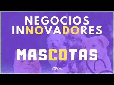 10 negocios innovadores y rentables sobre mascotas