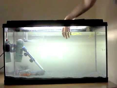Putting Hand In Red Belly Piranha Fish Tank Gone Seriously Wrong