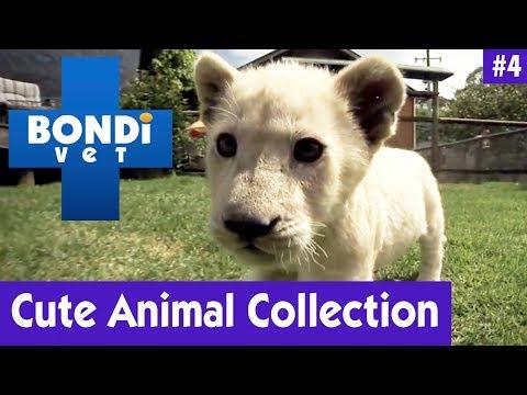 🦁 CUTE ANIMAL COLLECTION #4   Bondi Vet
