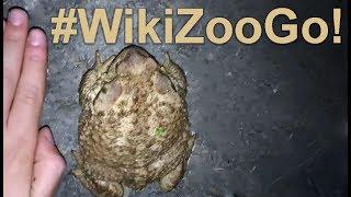 Compilado de Animales #WikiZoogo