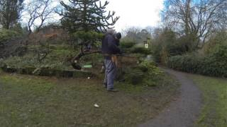Cloud pruning  of Juniper Valley Gardens Feb 2017