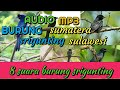 Suara Burung Srigunting Alam Part  Mp3 - Mp4 Download