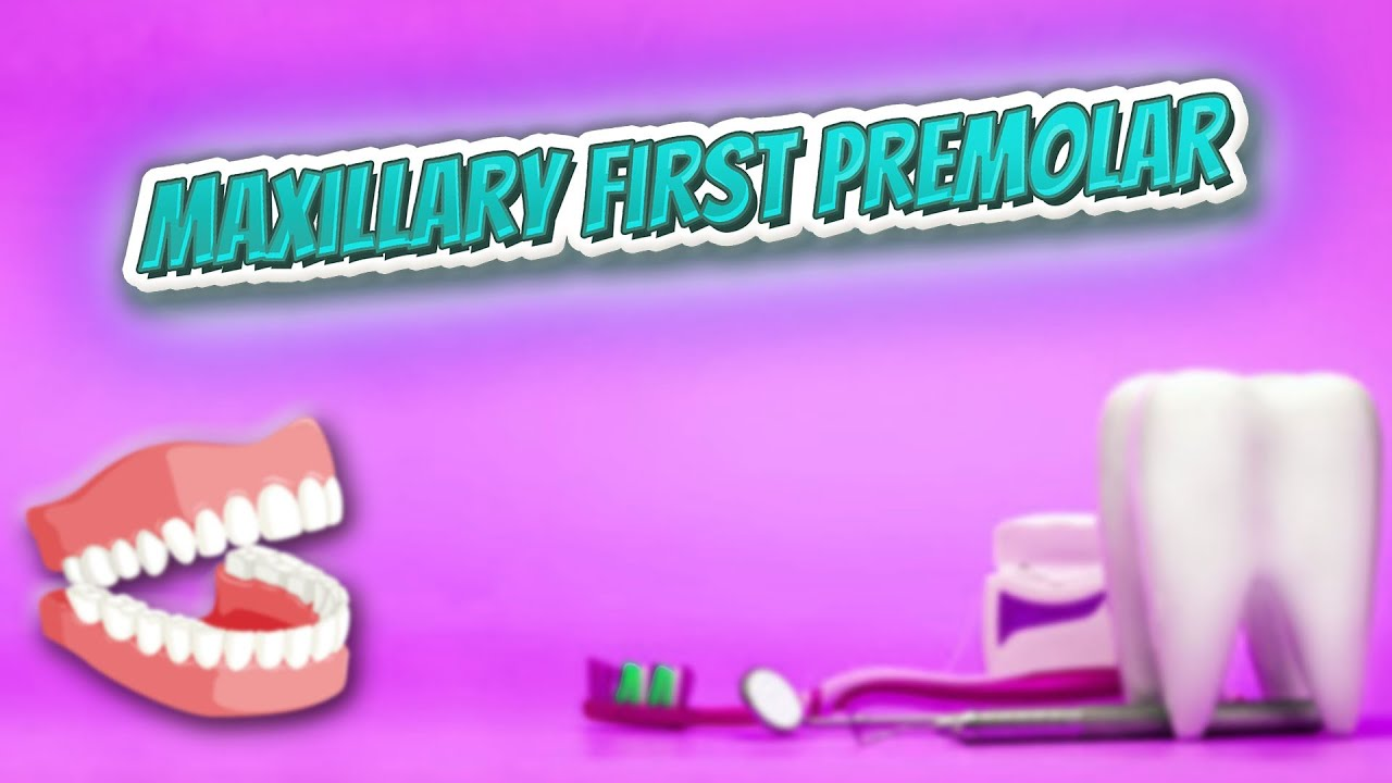 Maxillary first premolar - YouTube