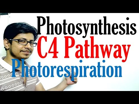 C4  pathway Photosynthesis and photorespiration