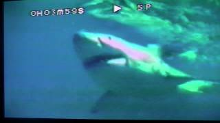 Jaws & Claws Sharks 1 of 2