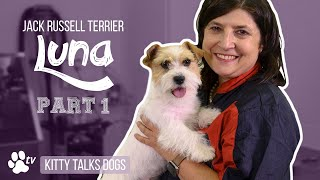 Grooming Luna the roughcoated Jack Russell Terrier  part 1 | Kitty Talks Dogs  TRANSGROOM