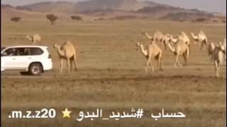 قناة شديد البدو الوضح عبدالله بن عون