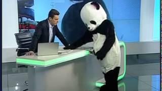 Un urs Panda a aparut in platoul emisiunii &quotIn gura presei&quot