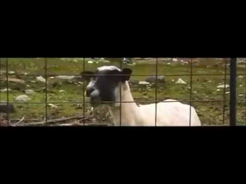 Taylor Swift - I knew you were goat when you walked in [1 HOUR!]