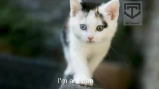 CAT SOUNDS- KITTY CAT SOUND