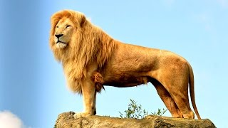 Дикие животные #Африки. #Развивающие мультики.