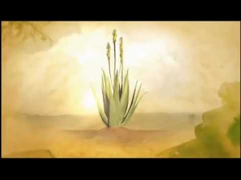 Forever Aloe Vera Gel best product
