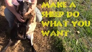 Easiest Way To Handle A Sheep By Yourself (NO EQUIPMENT)