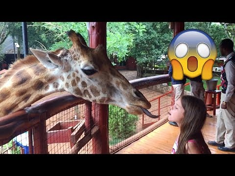 Lost in Africa: Giraffes!