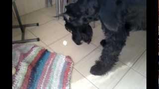 Собака играет с солнечным зайчиком