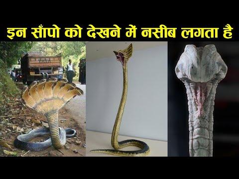 Download 10 rarest snakes in the world,double head snake,10 ऐसे सांप जिनको देखने में नसीब लगता है