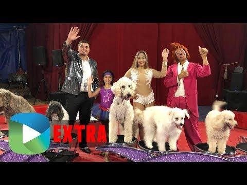 Olate Dogs Circus | Studio209 Extra