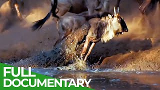Wildlife Laws: Only the Fastest Will Survive | Free Documentary Nature