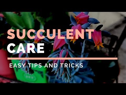 Succulent Care Guide // Angels Grove Co