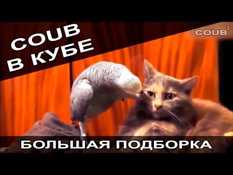 Большая подборка приколов COUB за август 2016. COUB В КУБЕ! - видео онлайн