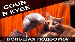 Большая подборка приколов COUB за август 2016. COUB В КУБЕ!