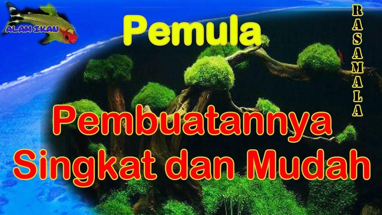 Cara Membuat Pohon Moss Kayu Rasamala Aquascape - YouTube
