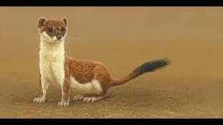 Paintings of Woodland Wildlife by artist Robert E Fuller